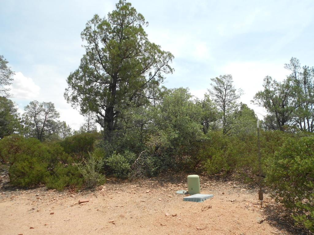 803 Desert Mimosa Circle - Photo 1