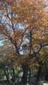 1374 Echo Meadow Lane - Photo 17