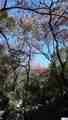 1374 Echo Meadow Lane - Photo 8