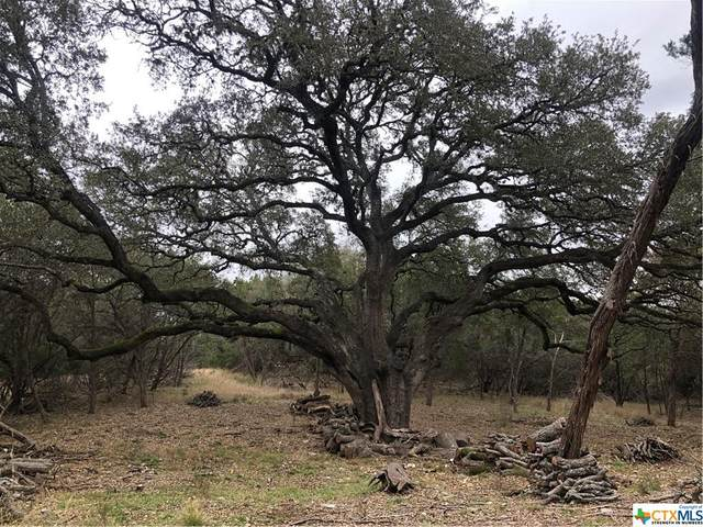 27734 Bogen Road, New Braunfels, TX 78132 (MLS #433105) :: The Myles Group