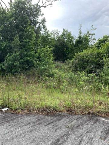 V/L Flamingo Estates, Hawkinsville, GA 31036 (MLS #213577) :: AF Realty Group