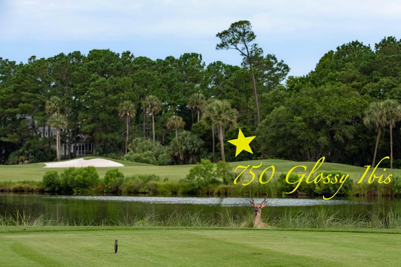 750 Glossy Ibis Lane - Photo 1