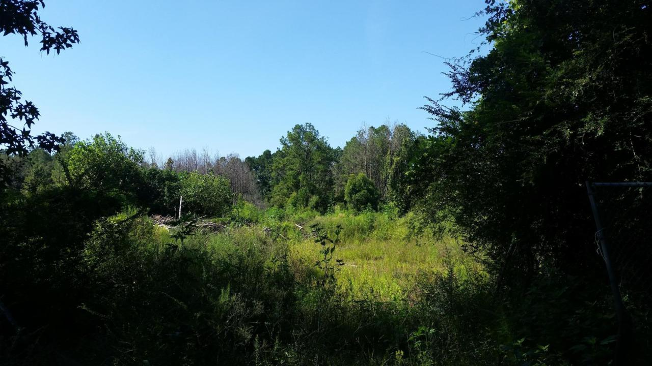 0 Old Hertz/Ashley Phosphate Road - Photo 1