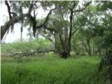 209 River Oak Drive - Photo 1