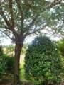 1004 Yellow Hawthorn Circle - Photo 32