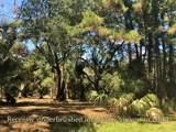 0 Palmetto 35Db Road - Photo 3
