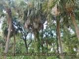 609 Jungle Road - Photo 1