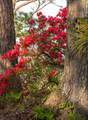 1544 Oak Island Drive - Photo 14