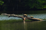 127 Oak View Way - Photo 39