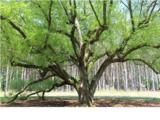 0 Angel Oak Drive - Photo 6