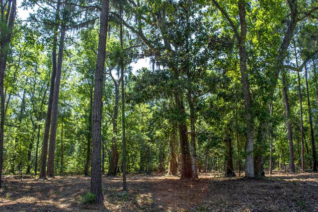 A1-B Palmetto Road, Edisto Island, SC 29438 (#19023466) :: The Cassina Group