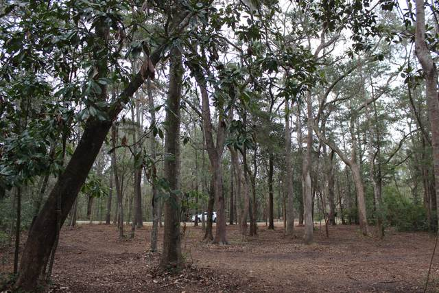 915 Crawford Place Drive, Edisto Island, SC 29438 (#20003513) :: The Cassina Group