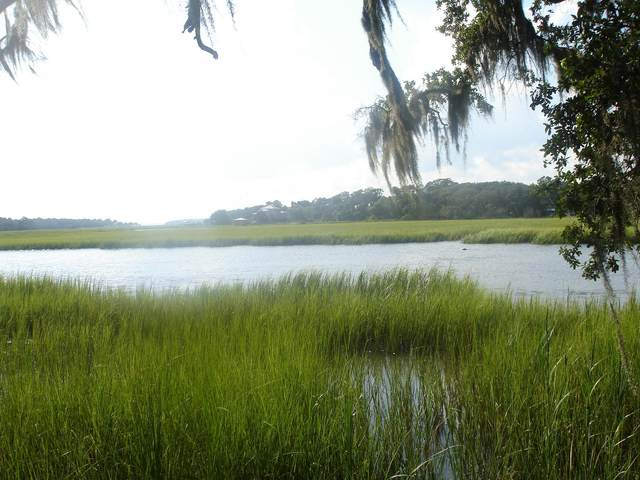 8266 Palmetto Rd., Edisto Island, SC 29438 (#20007649) :: The Cassina Group