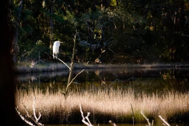 129 Blue Heron Pond Road, Kiawah Island, SC 29455 (#21003282) :: The Cassina Group
