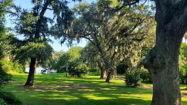 336 Coinbow Drive, Mount Pleasant, SC 29464 (#20014802) :: Realty ONE Group Coastal