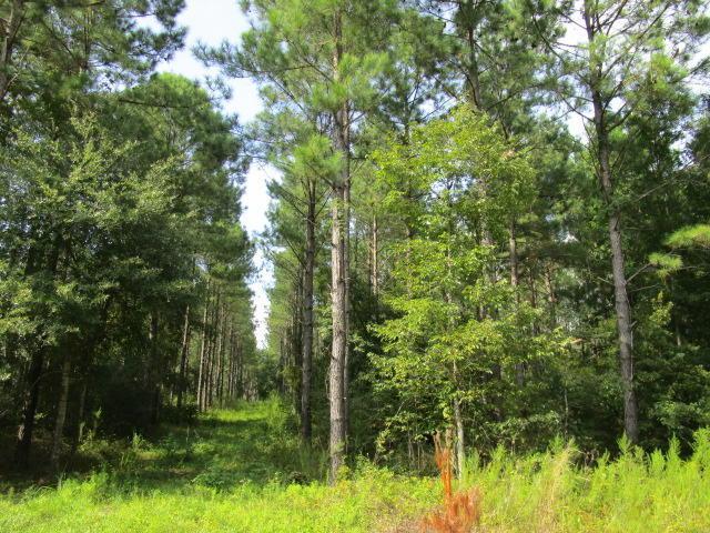 14.47 Ac Dingle Pond Road, Summerton, SC 29148 (#17023610) :: The Cassina Group