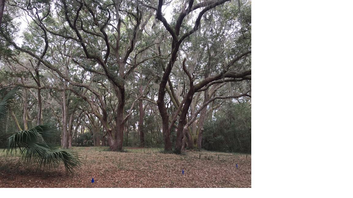 2148 Royal Pine Drive - Photo 1