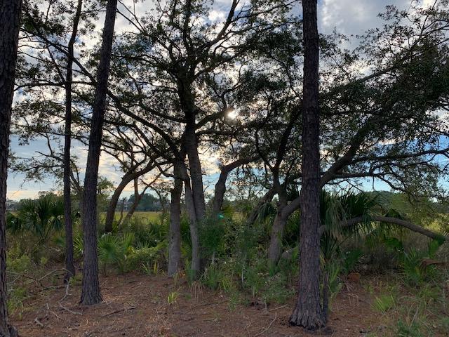 113 Captains Island Drive, Charleston, SC 29492 (#18027928) :: The Cassina Group