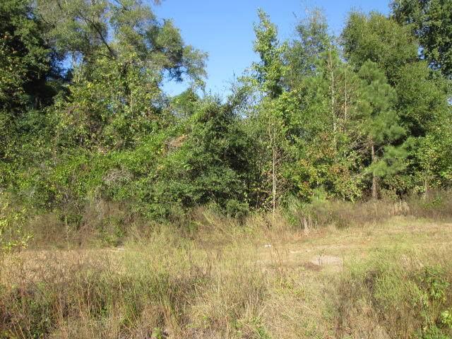 0 Augusta Highway, Walterboro, SC 29488 (#19029042) :: The Cassina Group