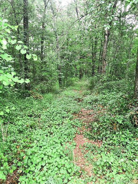 0 Wolfe Creek Rd & Remount Lane, Walterboro, SC 29488 (#20015711) :: The Cassina Group