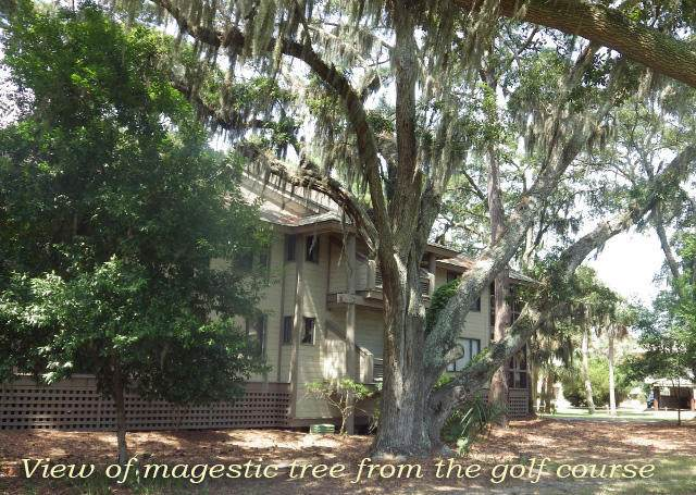 855 Club Cottage Road, Edisto Island, SC 29438 (#21003752) :: The Cassina Group