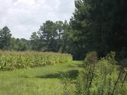 0 Droze Lane, Summerville, SC 29483 (#20021782) :: The Cassina Group