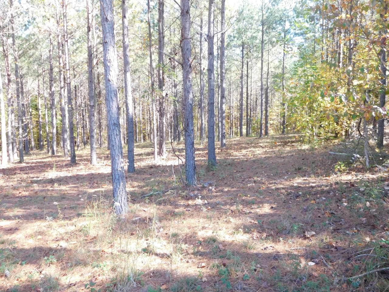 290 Compass Lot 229A Dr - Photo 1