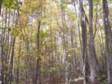 96 Acres Myers Loop Rd - Photo 46