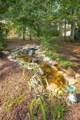2809 Oak Leaf Ln - Photo 39