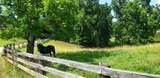 7.25 Acres Sugar Creek Road - Photo 17
