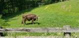 7.25 Acres Sugar Creek Road - Photo 31
