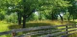7.25 Acres Sugar Creek Road - Photo 6