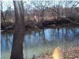 156 Tree Frog Ln - Photo 10