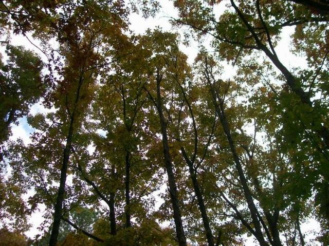 Lot 54 Lou Rd, Pikeville, TN 37367 (MLS #1291355) :: The Mark Hite Team