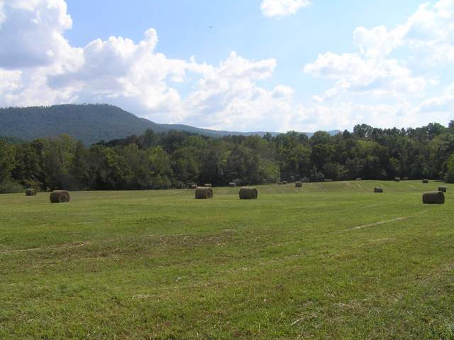 4496 Lower East Valley Rd, Pikeville, TN 37367 (MLS #1312451) :: Grace Frank Group