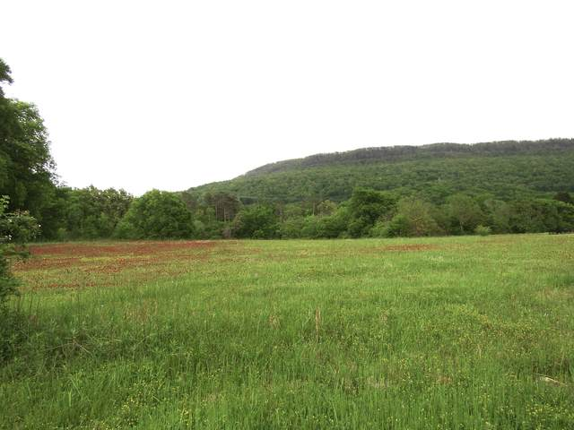12 Tanner Trl, Whitwell, TN 37397 (MLS #1318160) :: Chattanooga Property Shop