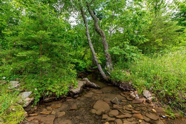 Lot 185 Big Bluff View, Pikeville, TN 37367 (MLS #1337751) :: The Weathers Team