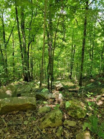 0 Scenic Dr #24, South Pittsburg, TN 37380 (MLS #1338834) :: Elizabeth Moyer Homes and Design/Keller Williams Realty