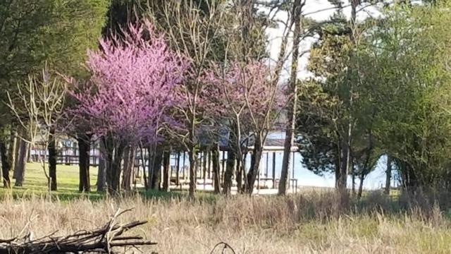 0 Pin Hook  1.4 Acres Rd Lot 38, Spring City, TN 37381 (MLS #1265351) :: Chattanooga Property Shop