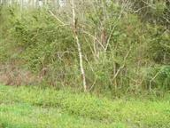 0 Smyrna Rd #2, Evensville, TN 37332 (MLS #1223458) :: The Mark Hite Team
