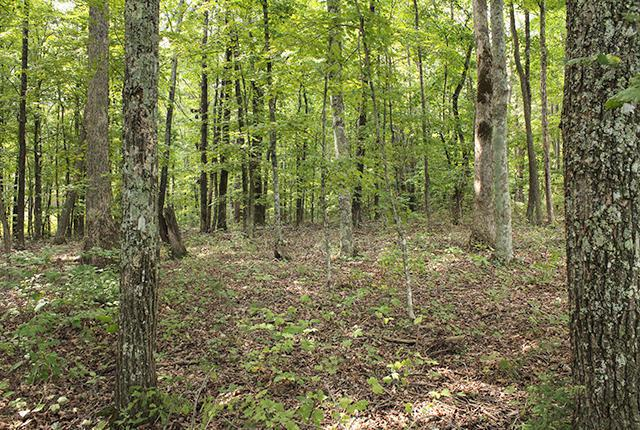 0 Mcgregor Lot 41, Mcminnville, TN 37110 (MLS #1237441) :: Chattanooga Property Shop