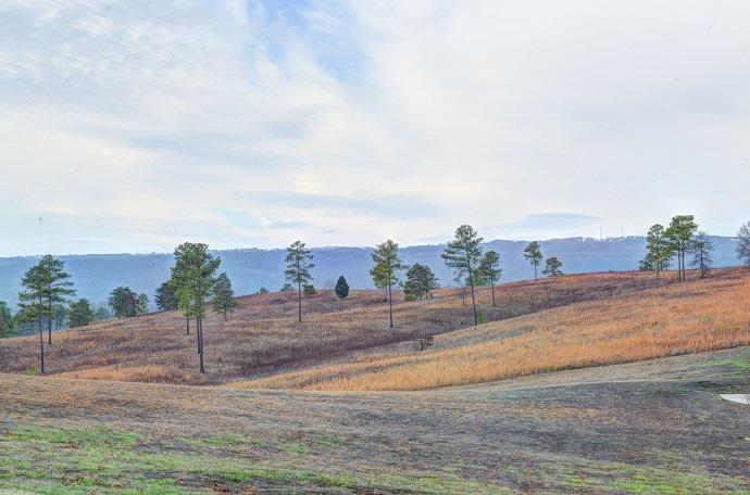 Lot 14 Sneed Rd - Photo 1