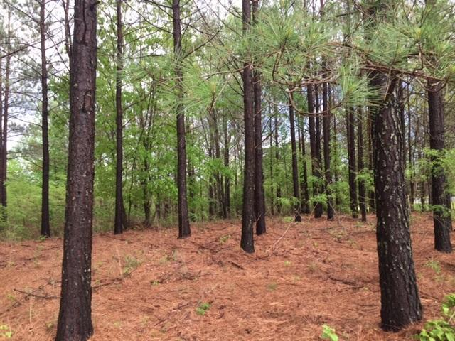 Lot 25 Preservation Drive #25, South Pittsburg, TN 37380 (MLS #1262830) :: The Robinson Team