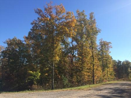 0 Forest Knoll Rd Lot 24, Dunlap, TN 37327 (MLS #1275796) :: The Robinson Team