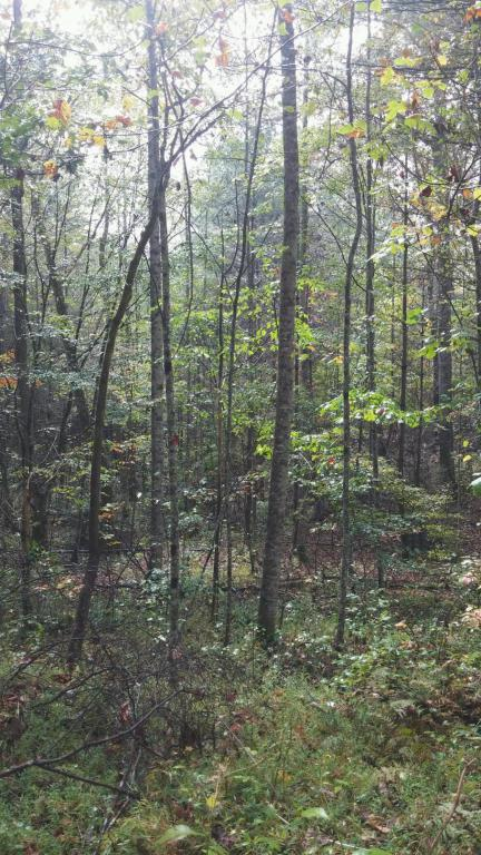 521 Archville Rd, Reliance, TN 37369 (MLS #1283624) :: Chattanooga Property Shop