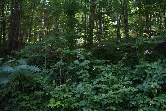 23.4 Acres Toestring Valley Rd 23.4 Acres, Spring City, TN 37381 (MLS #1285084) :: Keller Williams Realty | Barry and Diane Evans - The Evans Group
