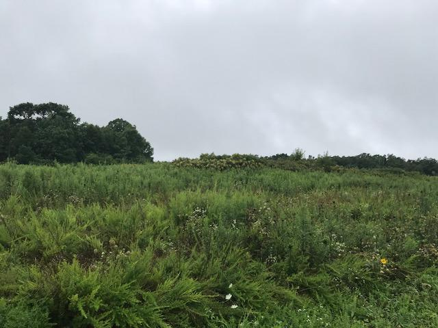 0 Gray Rock View Lot 253, Pikeville, TN 37367 (MLS #1285915) :: The Robinson Team