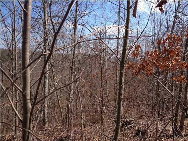 Lot 8 Cluck Cove #8, South Pittsburg, TN 37380 (MLS #1293032) :: Keller Williams Realty   Barry and Diane Evans - The Evans Group