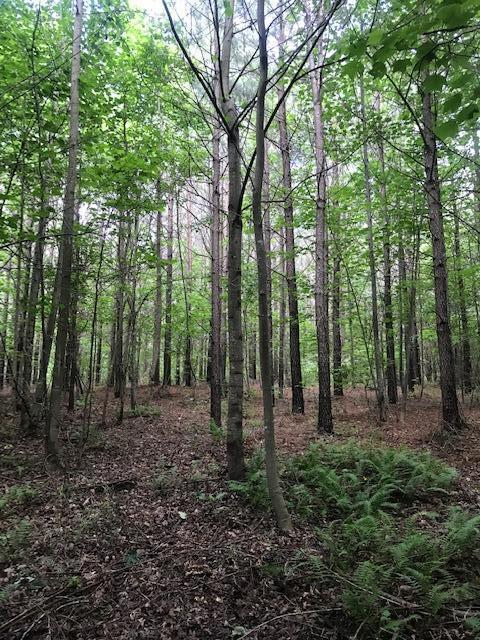 Lot 1 Clouse Hill Road Lot 1, Tracy City, TN 37387 (MLS #1301598) :: Keller Williams Realty | Barry and Diane Evans - The Evans Group