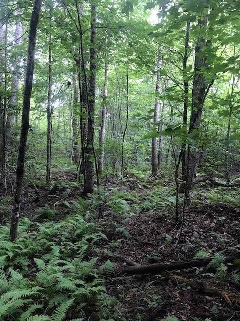 41 Palmer Firetower Road, Palmer, TN 37365 (MLS #1310765) :: Chattanooga Property Shop